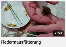 Fledermausfütterung